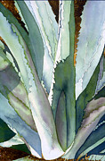 Shadows Painting Posters - Agave 1 Poster by Eunice Olson