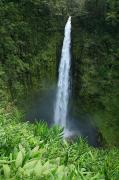 Pour Framed Prints - Akaka Falls Framed Print by Peter French - Printscapes