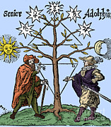 1400s Prints - Alchemical Celestial Tree Print by Science Source