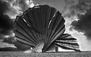 East Dennis Metal Prints - Aldeburgh Scallop Metal Print by Darren Burroughs