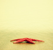 Starfish Prints - Alone Print by Kristin Kreet