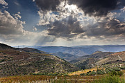 Wine Vineyard Photos - Alto Douro Wine Region by Andre Goncalves