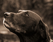 Dog Photos - Always Faithful by Roger Wedegis