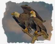 Animal Digital Art Digital Art Prints - American Bald Eagle Pair Print by Larry Linton