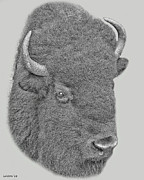Bison Art - American Bison by Larry Linton