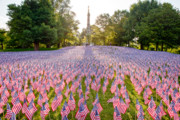 Boston Common Prints - American Flags Print by Susan Cole Kelly