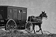 Horse And Buggy Posters - Amish Buggy Black and White Poster by David Arment