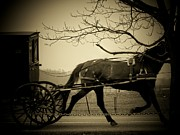 Amish Buggy Photos - Amish Buggy  by Michael L Kimble