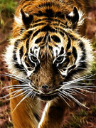 Tiger Fractal Photos - Amur Tiger Fractal by Steev Stamford