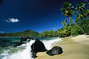 Marquesas Islands Prints - Anaho Bay With Coconut Palms Print by Tim Laman