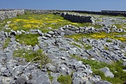 The Burren Prints - Ancient Limestone Fields Print by Bob Gibbons