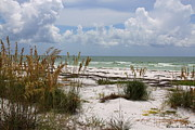 Florida Waterscape Originals - Anclote Key Preserve by Barbara Bowen