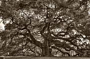 Live Oak Prints - Angel Oak Live Oak Tree Print by Dustin K Ryan