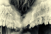 Angel Wings Photos - Angel by Stylianos Kleanthous