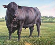 Cattle Paintings - Angus Bull by Hans Droog