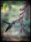 Floral Hummingbird Posters - Annas Hummingbird Poster by Saija  Lehtonen