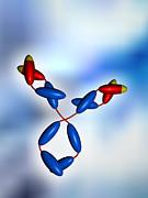Antibody Print by Pasieka