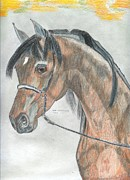 Arabia Originals - Arabian Horse by Don  Gallacher