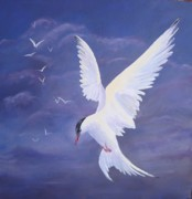 Sea Birds Paintings - Arctic Tern by Kathleen Tucker
