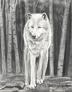 Arctic Drawings Originals - Arctic Wolf by Christian Conner