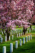 Honor Posters - Arlington Cherry Trees Poster by Brian Jannsen