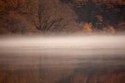As The Fog Lifts Print by Karol  Livote