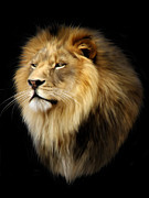 Animal Digital Art Prints - Aslan Print by Julie L Hoddinott
