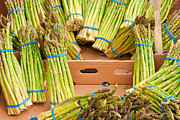 Locally Grown Metal Prints - Asparagus Metal Print by Tom Gowanlock