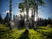 Warm Light Prints - Aspen Light Print by Leland Howard