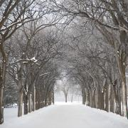 Bare Trees Posters - Assiniboine Park, Winnipeg, Manitoba Poster by Keith Levit