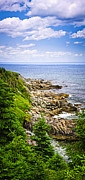 Evergreen Framed Prints - Atlantic coast in Newfoundland Framed Print by Elena Elisseeva