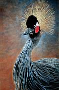 Africa Pastels Framed Prints - Attitude Bird Framed Print by Carol McCarty