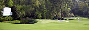 Golf Hole Posters - Augusta National 11 White Dogwood Masters Photo Poster by Phil Reich
