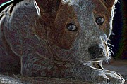 Puppies Digital Art Posters - Australian Cattle Dog Poster by One Rude Dawg Orcutt