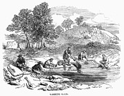 Gold Rush Prints - Australian Gold Rush, 1852 Print by Granger