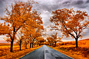 Perspective Originals - Autumn - 4 by Okan YILMAZ