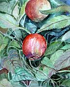 Red Leaves Drawings - Autumn Apples by Mindy Newman