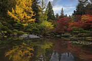 Japanese Garden Posters - Autumn Brilliance Poster by Mike Reid