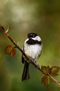 Renee Prints - Autumn chickadee Print by Renee Dawson