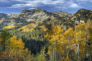 Wasatch Posters - Autumn Colors in the Wasatch Mountains Poster by Utah Images