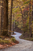 Peaceful Scenery Posters - Autumn Drive Poster by Andrew Soundarajan