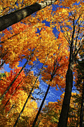 Shine Metal Prints - Autumn forest Metal Print by Elena Elisseeva