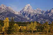 Mountain Cabin Framed Prints - Autumn in the Tetons Framed Print by Andrew Soundarajan