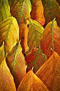 Yellow Leaves Prints - Autumn leaves arrangement Print by Elena Elisseeva