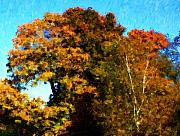 Digitally Enhanced Photographs - Autumn Leaves by David Lane