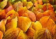 Yellow Leaves Photo Prints - Autumn leaves  Print by Elena Elisseeva