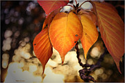 Mikki Cucuzzo Metal Prints - Autumn Leaves Metal Print by Mikki Cucuzzo