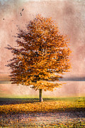 Autumn Light Print by Hannes Cmarits
