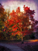Autumn Maple 2 Print by Jessica Jenney