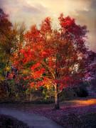 Autumn Maple Print by Jessica Jenney